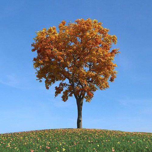 gold leafy elm tree 3d model obj mtl 1