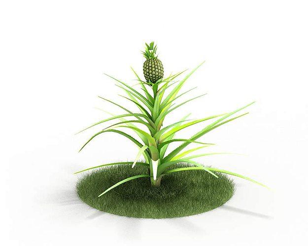 pineapple plant 3d model obj mtl 1