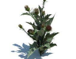 3D Flowering Thistle Weed