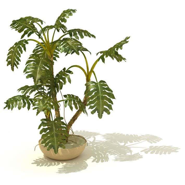 Potted Tropical Indoor Plant Model