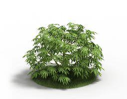 3D Leafy Green Bush