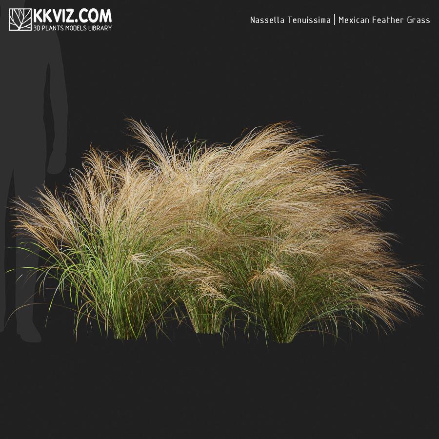 Nassella Tenuissima  Mexican Feather Grass-06