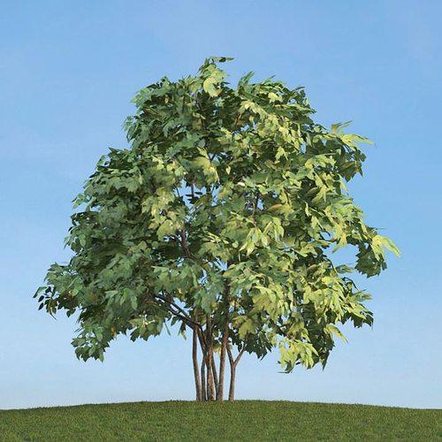 leafy green tree 3d model obj mtl 1