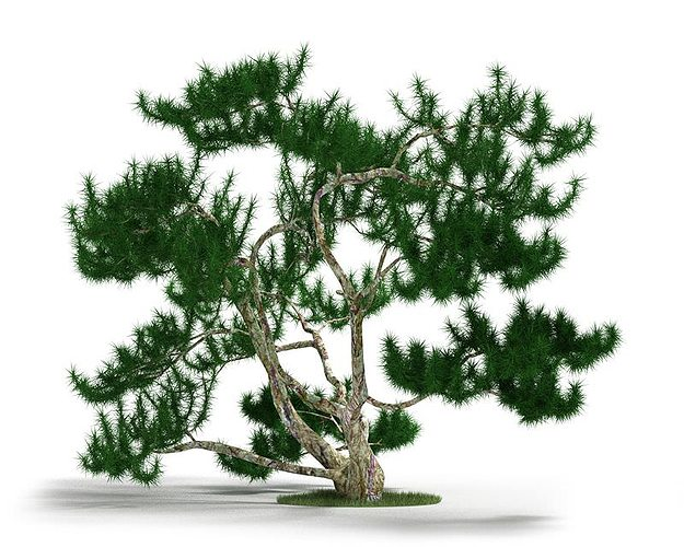 bonsai plant decoration 3d model obj 1