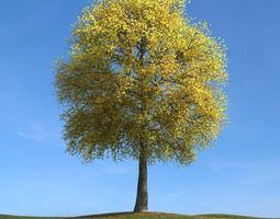 Yellow Leaf Tree 3D