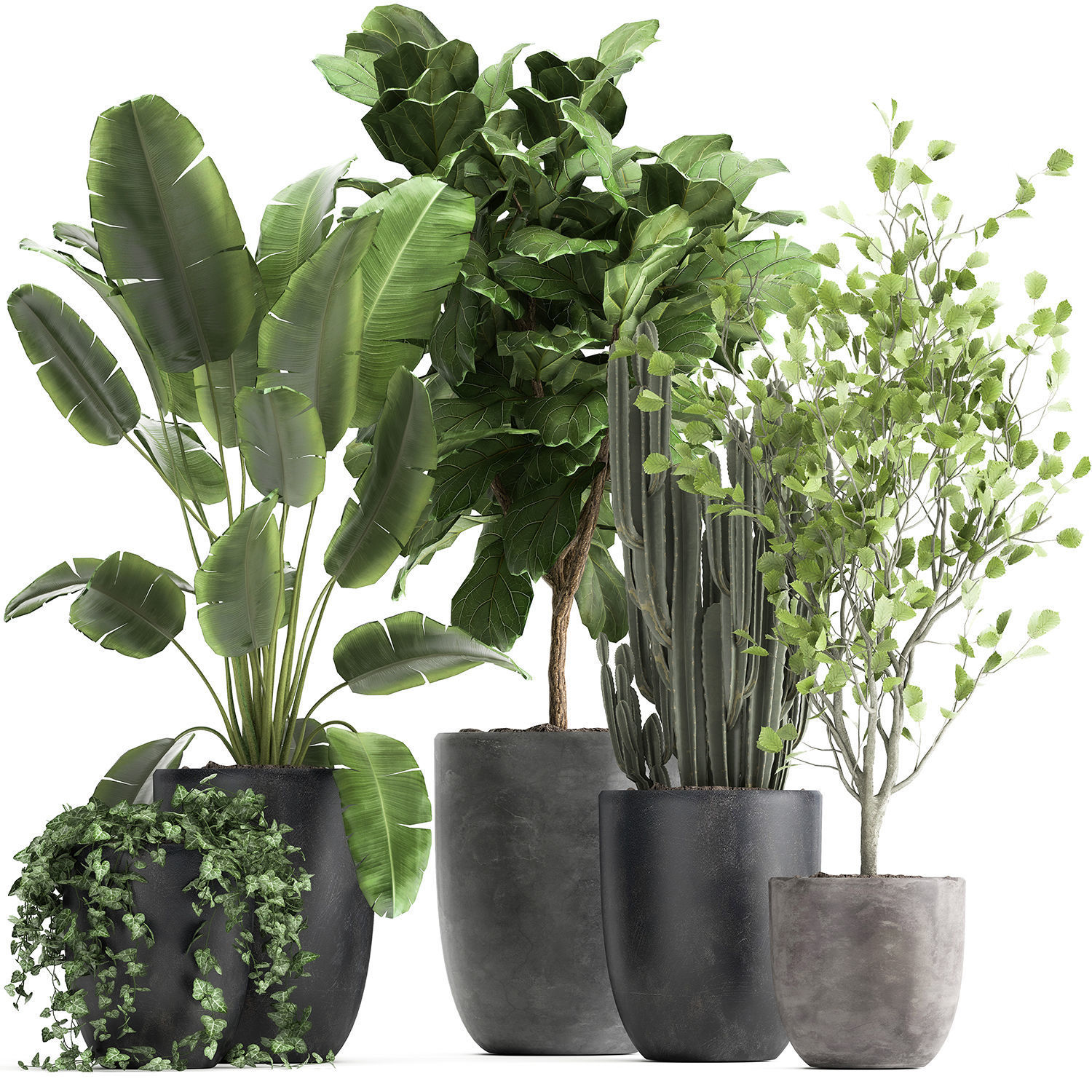 Houseplants in a flowerpot for the interior 961