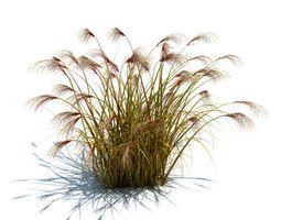 3d model wild grass