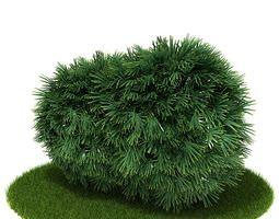 3D Green Pine Shrub