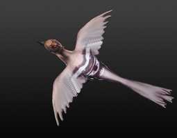3d model hoopie bird