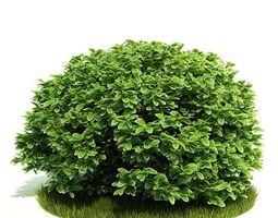 yard plant 3d model