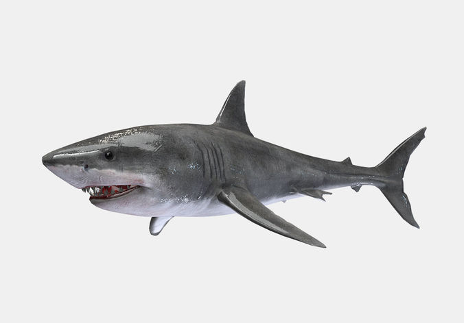 great white shark 3d model rigged animated fbx ma mb 1