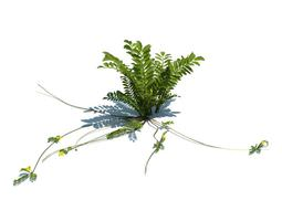 fern with long stems 3d model obj