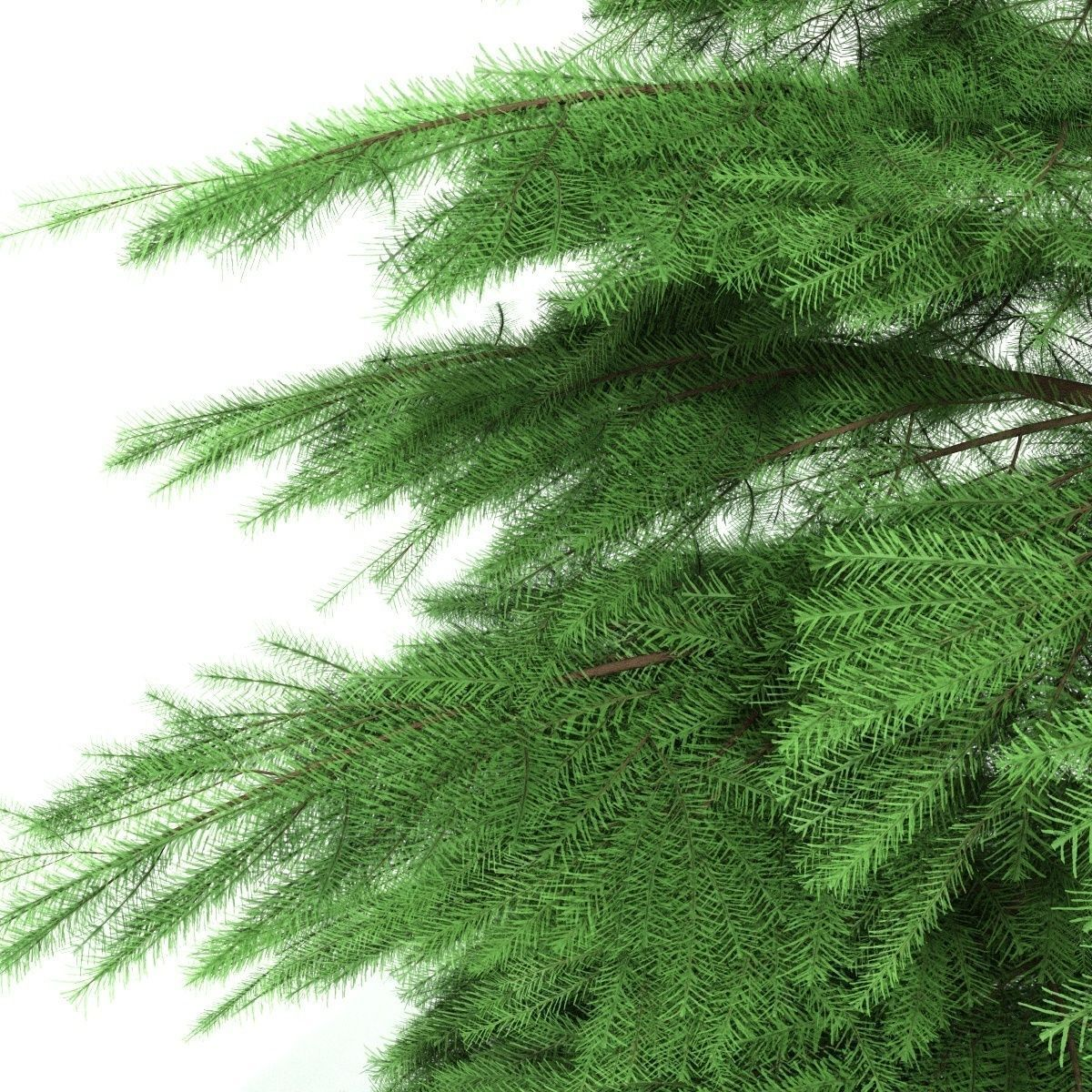 fir tree animation of growth 3d model cgtrader