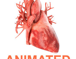 3d model human heart animated v3 with interior and animation PBR