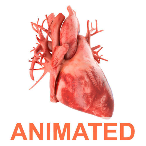 human heart animated v3 with interior and animation 3d model animated max obj fbx c4d lwo lw lws 1