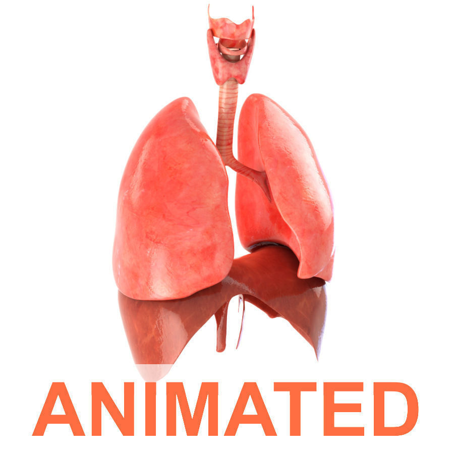 Lungs animated