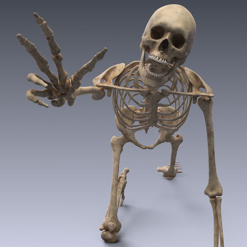 3d model human skeleton rigged vr / ar / low-poly rigged animated, Skeleton