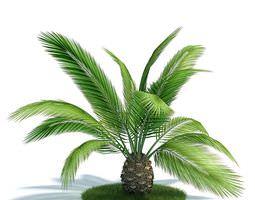 green tropical plant   phoenix canarienis 3d model