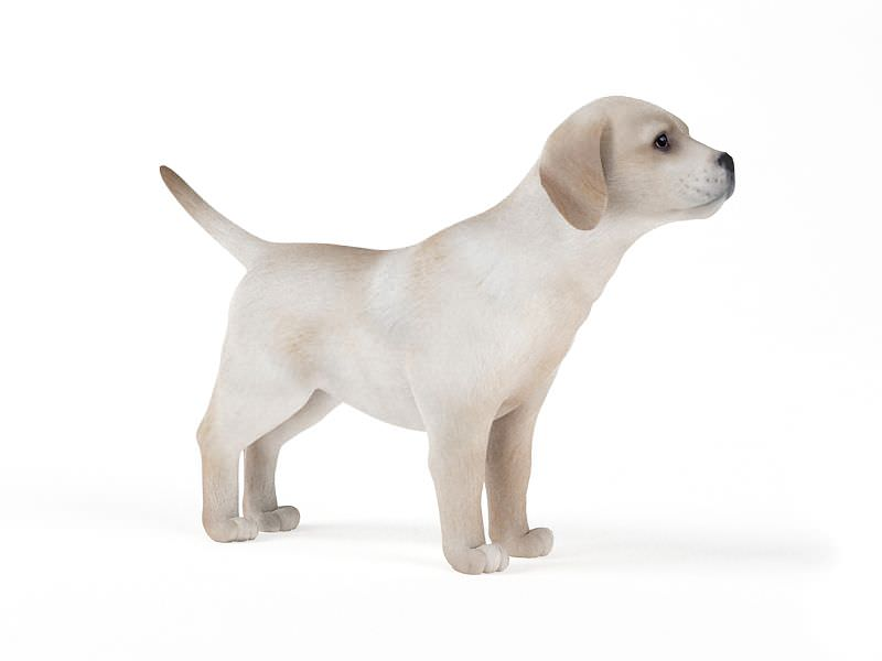 White Puppy Paying Attention