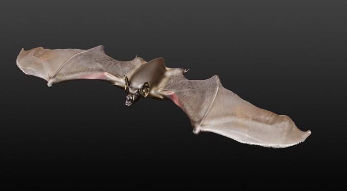 vampire bat  3d model obj mtl 1