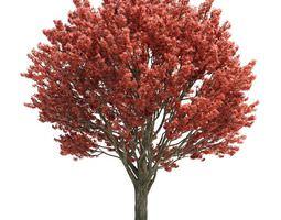 3d pink leaf tree