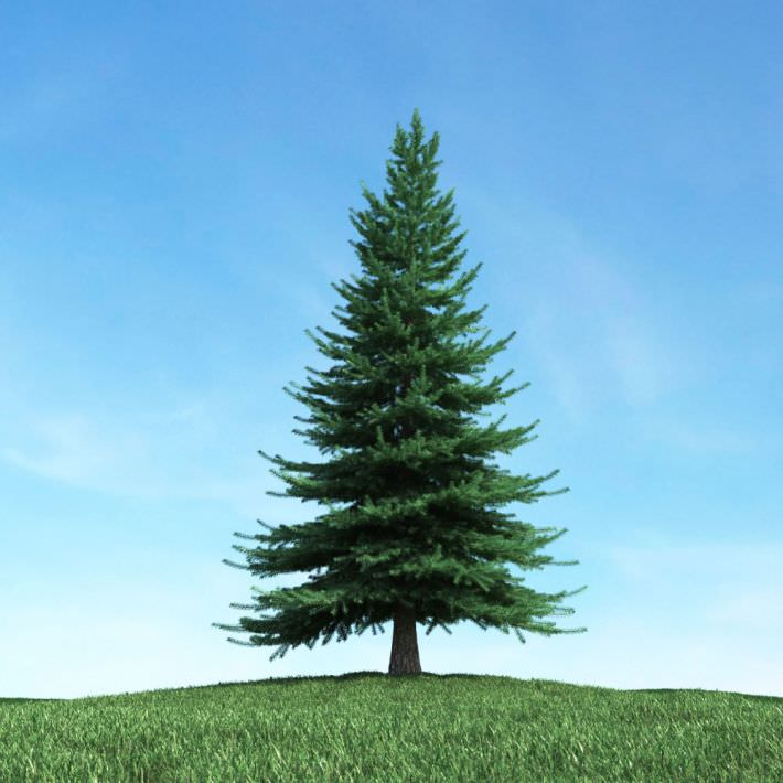 large green pine tree 3d model obj cgtradercom