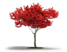 red leafed tree 3d model