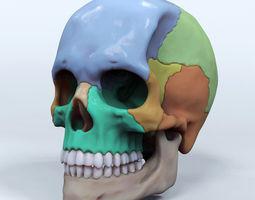 Artist Sculpted Skull Reference 3D printable model