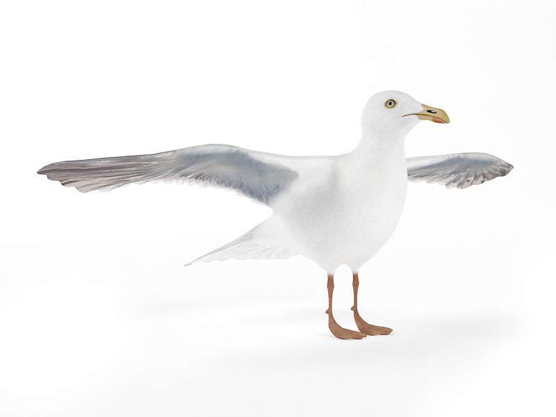3d white seagull bird
