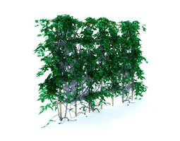3D Ivy Growing On A Fence
