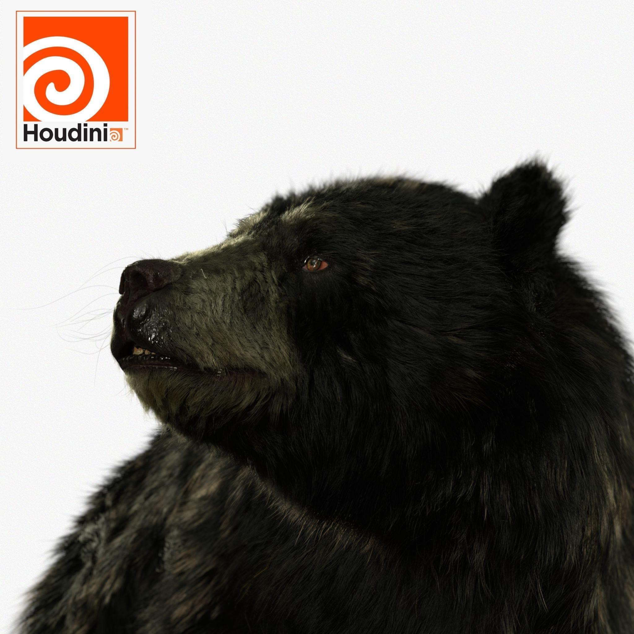 black bear RIGGED