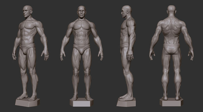 male anatomy sculpture 3d model 3d printable stl, Human body