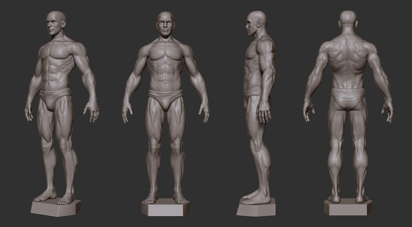 3d Print Model Male Anatomy Sculpture Cgtrader