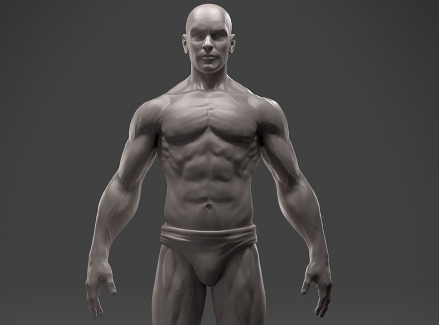 Male Anatomy Sculpture