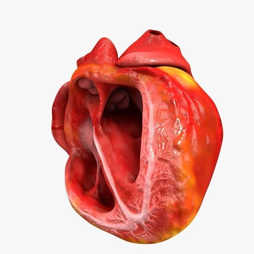 animated realistic human heart - medically accurate 3d model low-poly animated obj 3ds fbx c4d dxf stl 40