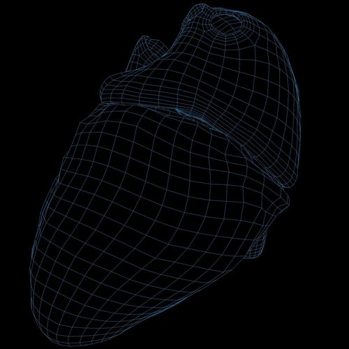 animated realistic human heart - medically accurate 3d model low-poly animated obj 3ds fbx c4d dxf stl 69
