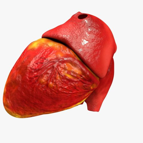 animated realistic human heart - medically accurate 3d model low-poly animated obj 3ds fbx c4d dxf stl 38