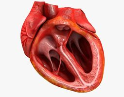 animated realistic human heart - medically accurate 3d model low-poly animated obj 3ds fbx c4d dxf stl