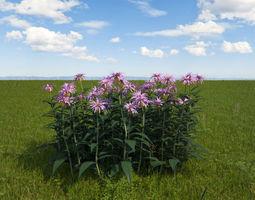 bee balm flowers 3d model max
