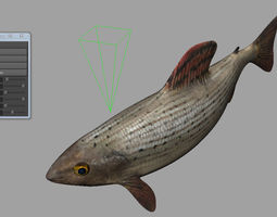 animated fish 3d