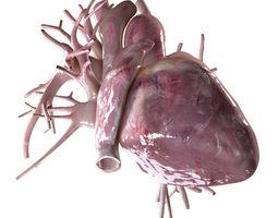 Human Heart Beating High Quality 3D Model