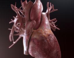 vein Human Heart High Quality 3D model