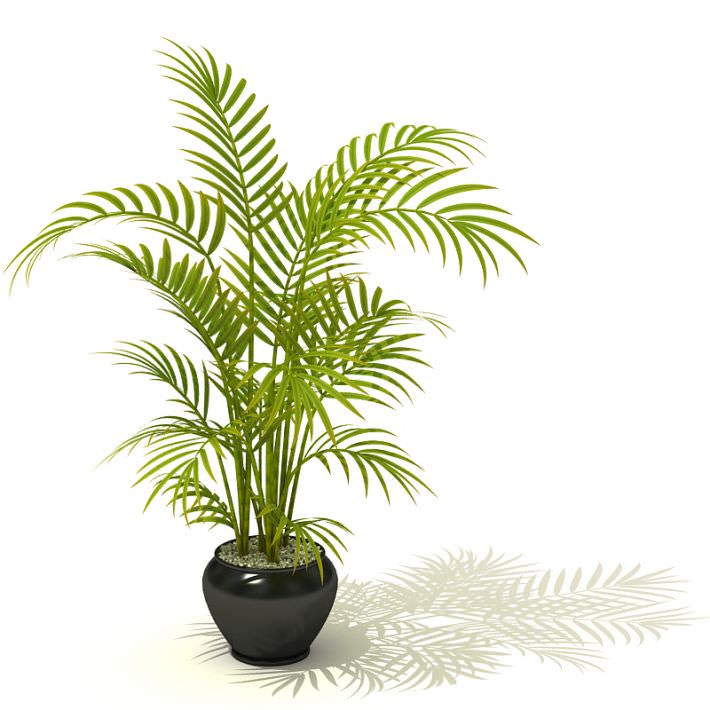 tall potted palm plant 3d model 1 - Tall Potted Plants