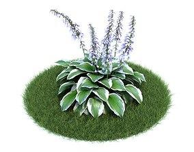Blooming Plant Variegated Hosta 3D