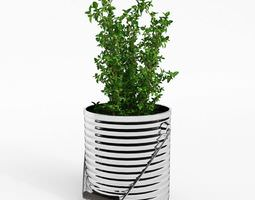 Potted Thyme Plant 3D