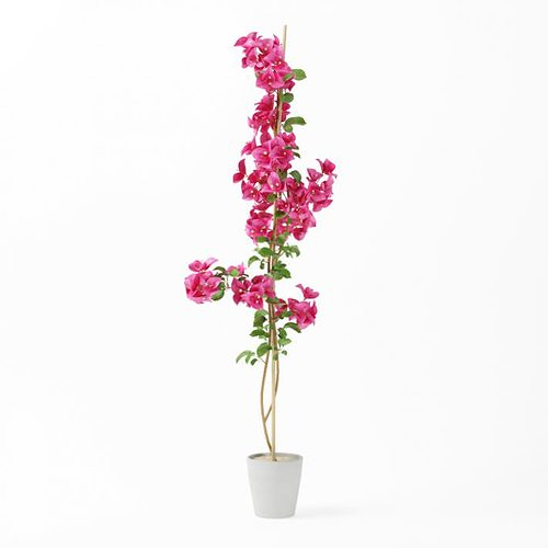 3d Model Tall Pink Potted Flower Cgtrader