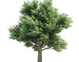 Large Green Tree 3D model