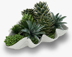 Succulents in a Giant Clam Bowl 3D model