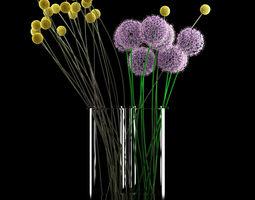 3D model Craspedia and Allium