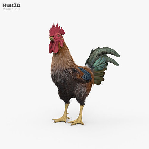 Rooster HD